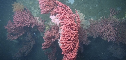 Atlantic Canyons study team to receive partnership award